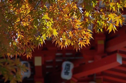 高幡不動201211-14
