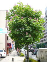 0517何の木?