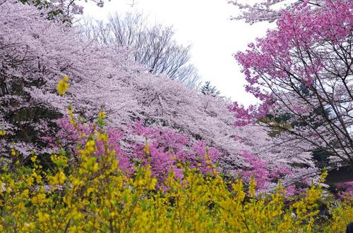 昭和記念公園201404-14