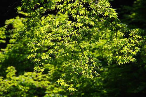 百草園新緑まつり-8