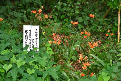 高幡不動尊201608-6