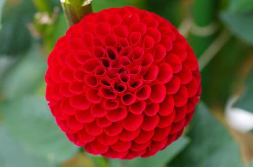 神代植物園2011-3