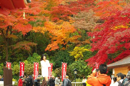 高幡不動201411-12