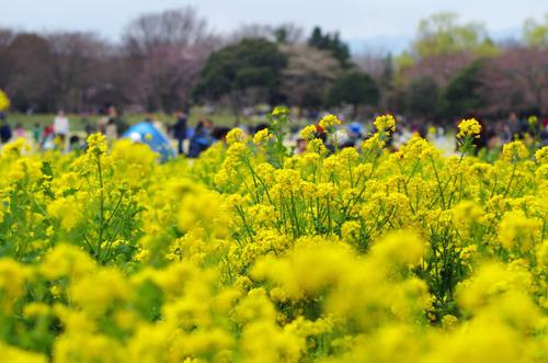 昭和記念公園201204-5