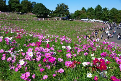昭和記念公園201010-4