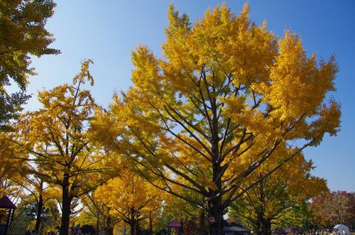 昭和記念公園201111-8