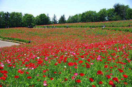 昭和記念公園201401-13