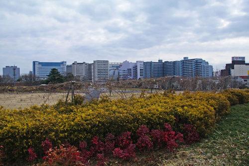 昭和記念公園201002-1