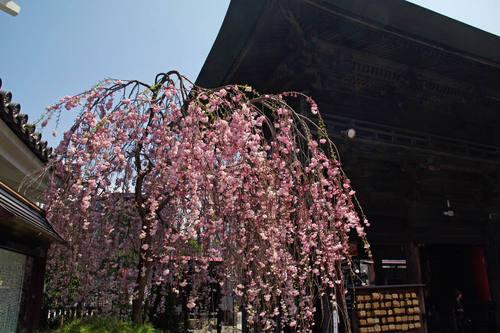 高幡不動尊20100411-2