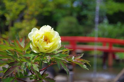 高幡不動201405-6