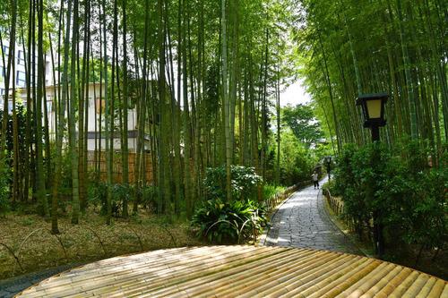 伊豆竹林の小径