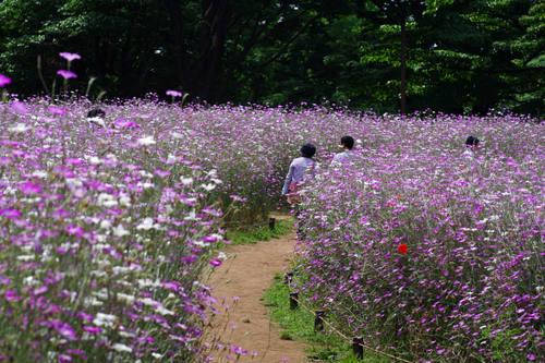 昭和記念公園201006-2