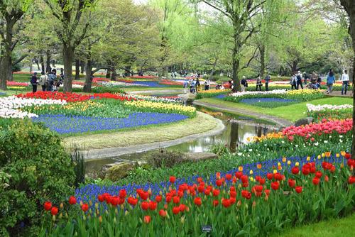 昭和記念公園201504-5