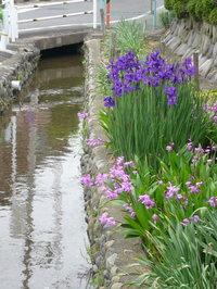 散歩写真200805水の流れる街
