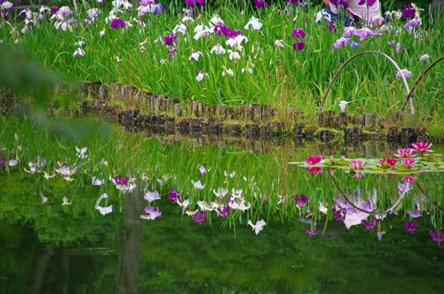 昭和記念公園201206-11