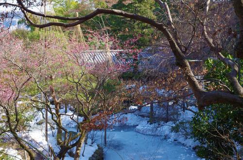 京王百草園201402-12