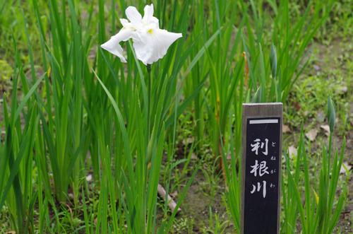 昭和記念公園201106-7