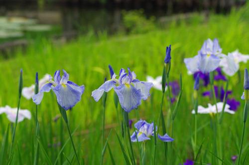 昭和記念公園201106-6