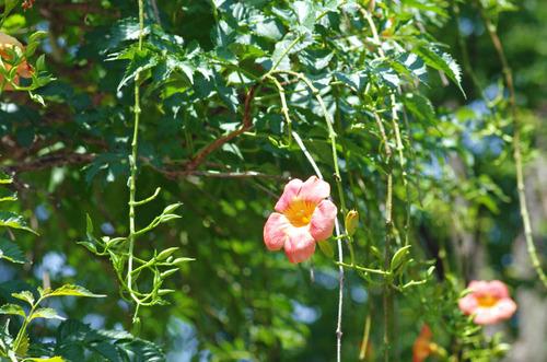 昭和記念公園201408-9