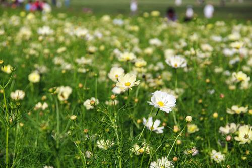 昭和記念公園201010-2