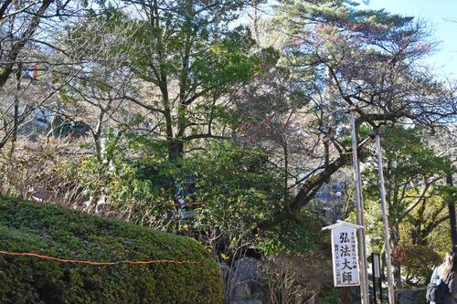 高幡不動尊201512-5