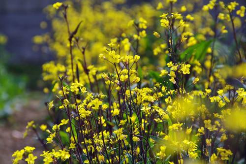 畑の花201004-2