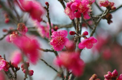 昭和記念公園201402-4