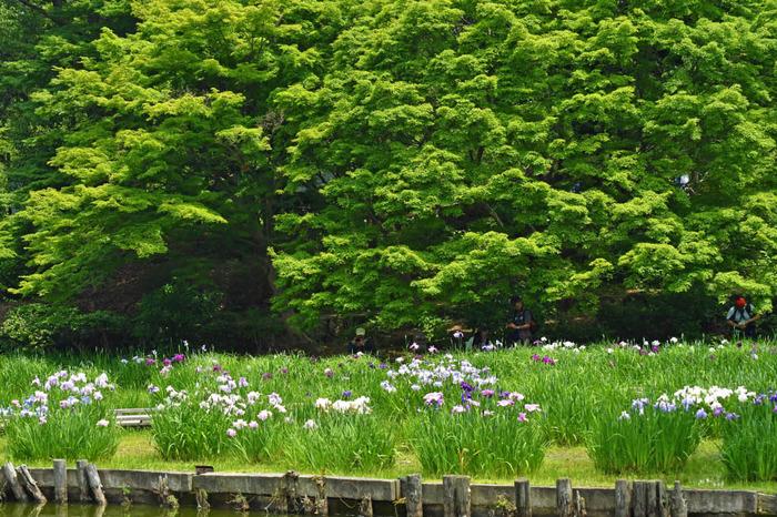 昭和記念公園201605