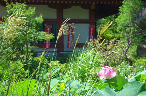 高幡不動201407-8