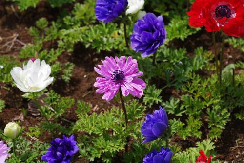 昭和記念公園の花201004-10