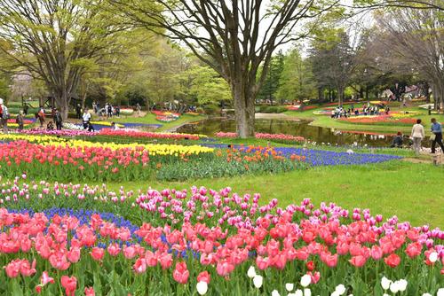 昭和記念公園201504-11