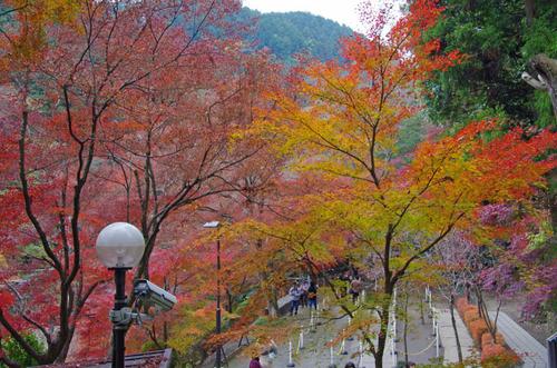 高尾山201111-19