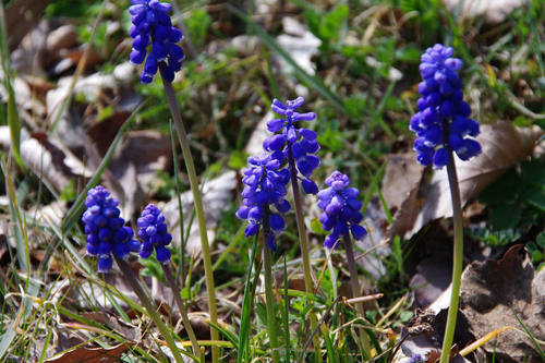 散歩道の春201003-7