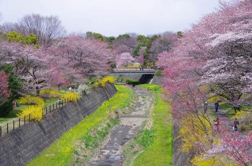 昭和記念公園201204-1