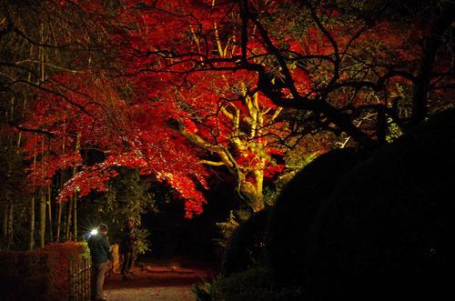 百草園紅葉ライトアップ201211-10
