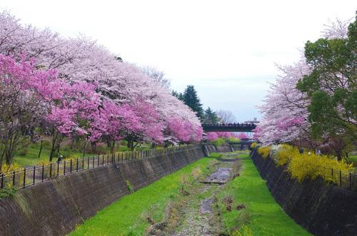 昭和記念公園201404-13