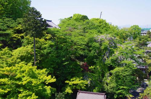 高幡不動201304-10