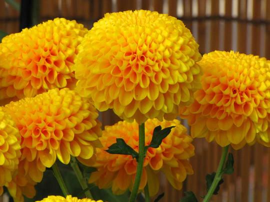 高幡不動尊20091107-7