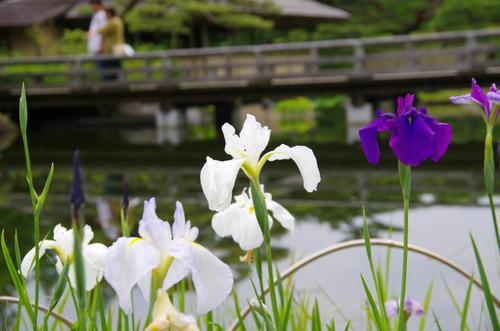昭和記念公園201206-9