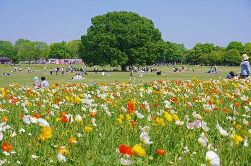 昭和記念公園201405-9