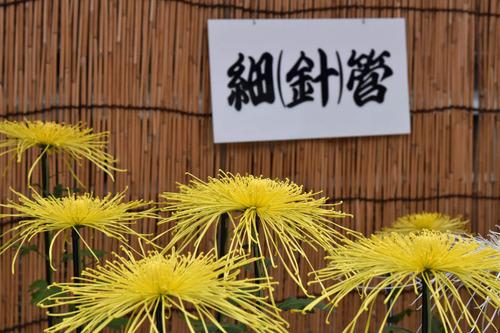 高幡不動尊201511-10