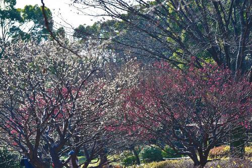 昭和記念公園201601-6