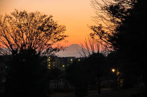 昭和記念公園201312-1