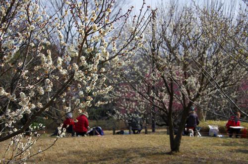 昭和記念公園201102-10