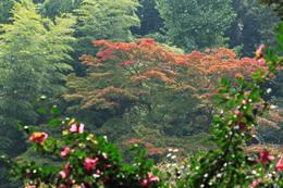 秋の百草園200911-5