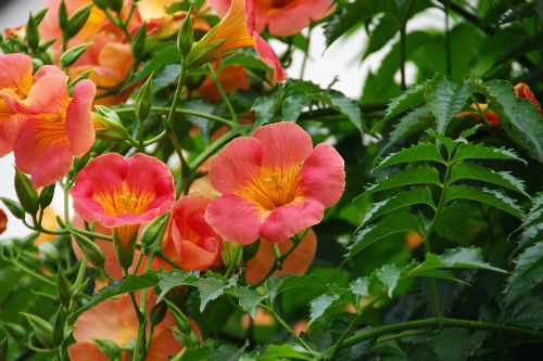 散歩道の花201006-8