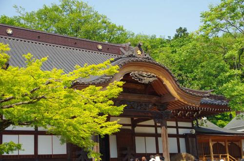 神代植物公園201305-8