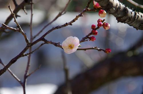 高幡不動尊20110213-5