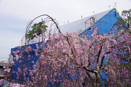 高幡不動尊201204-9