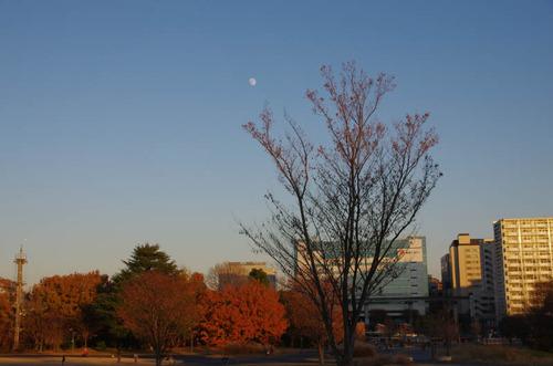 昭和記念公園201312−11